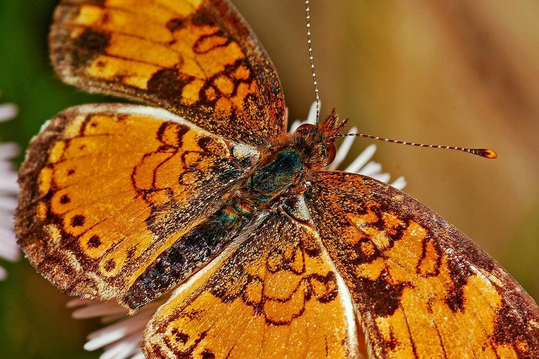 Catching a Golden Butterfly
