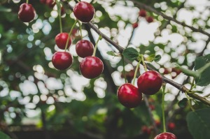 The-Avoidable-Mistake-of-Cherry-Picking-Data